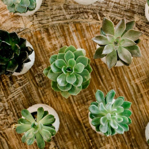 Potted Succulent Favors - Juliette and Abdon