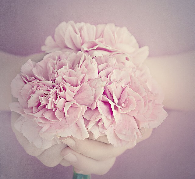Carnation Comeback